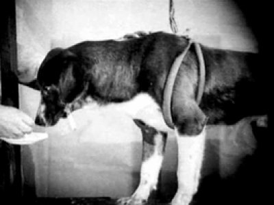 Vsevolod Pudovkin. Mekhanika golovnogo mozga [Mecánica del cerebro]. Película, 1926